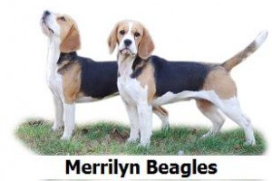 Merrilyn Beagles